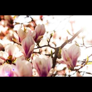 Rosa Frühling Sonne Erwachen Natur Bunt
