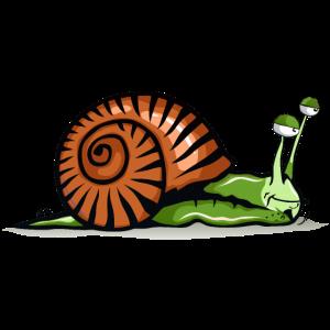 Schnecke Zeichnung Müdigkeit Muschel Grün
