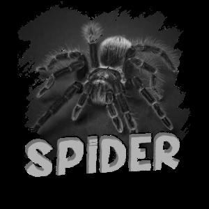 Spinne Spinnennetz Insekt Milben Spider Arachnid