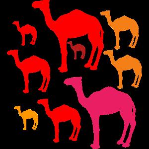 Karawane Schöne Kamele