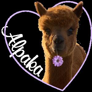 Ich liebe Alpaka, Alpaka, Lama