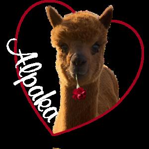 Ich liebe Alpaka, Lama, Lieblingstier Alpaka