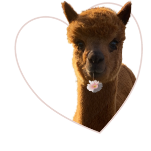 Ich liebe Alpaka, I love Alpaka, Alpaka Bekleidung