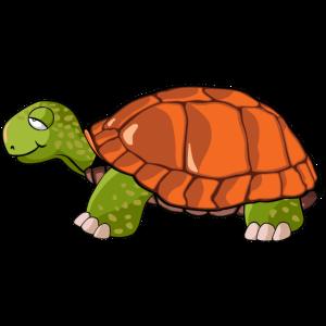 Schildkröte Zeichnung