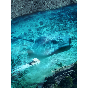 Manta ray lives in river gorge