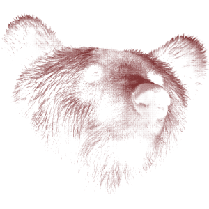 Bär Braunbär Grizzly
