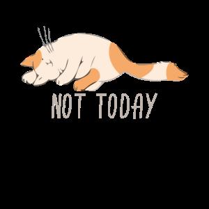 Cat - Not today