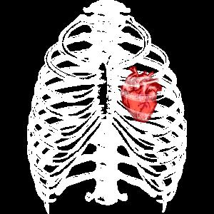 Anatomie Skelett Brustkorb mit Herz