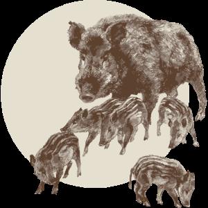 Wildschwein Bache Frischlinge Rotte Sau Waldtier