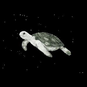 Tier Meerestier Schildkröte