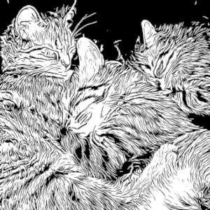 Kätzchen, die schlafen