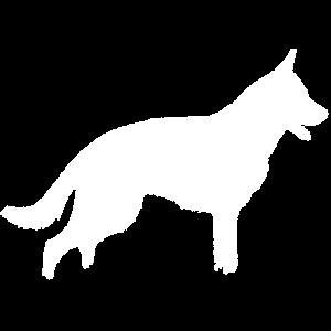 German Shepherd Deutscher Schäferhund