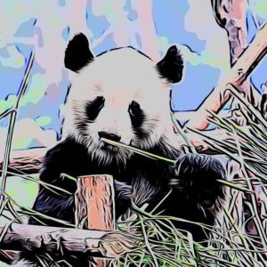Panda color
