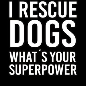 hunde tierschutz tierretter statement