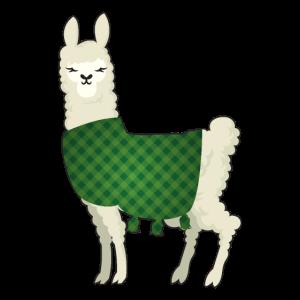 Alpaka mit Kleidungsstücken für Alpaka Liebhaber