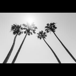 Palmen in der Sonne