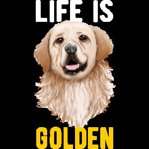 Hunde Golden Retriever Hunderasse Geschenk