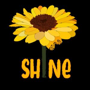 Glanz Sonnenblume