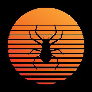 Spinne -Silhuette im Sonnenuntergang