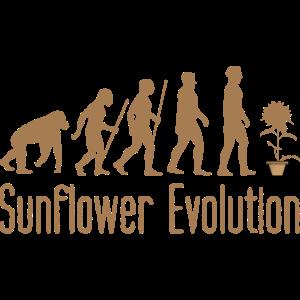 sunflower evolution sonnenblume entwicklung garten
