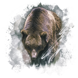 Grizzly Grizzly Tier Wild Leben Jungle Natur