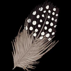 Von Hand gezeichnete und kolorierte Perlhuhn Feder