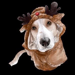 Reindeer Süßer Hund