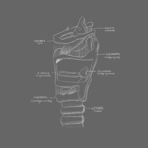 Kreidezeichnung Larynx
