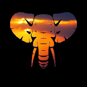 Elefant Sonnenuntergang