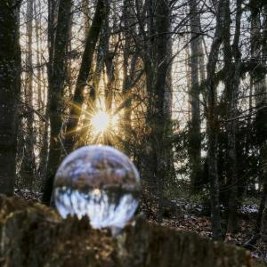 Glaskugel im Wald 2