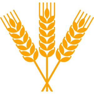 Garbe Weizen