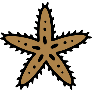 Seestern starfish Meeresbewohner Ozean Tauchen