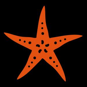 Seestern starfish Meer Ozean Meeres