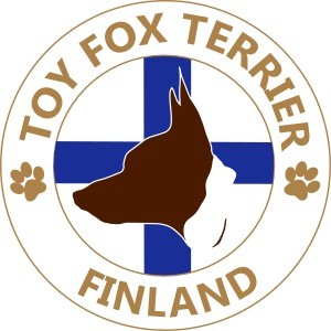 Toy Fox Terrier- Finland