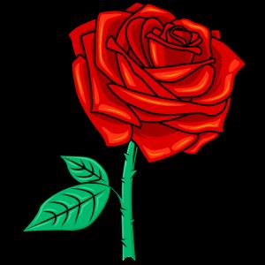 Rose Illustration Symbol Liebe