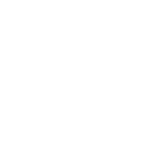 Spinne Schwarze Witwe