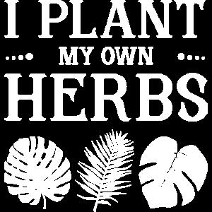Ich pflanze meine eigenen Kräuter Kraut Gewürze