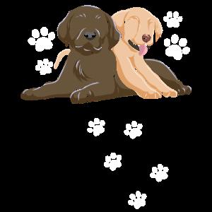 Golden Retriever Labrador Welpen Hunde Pfoten