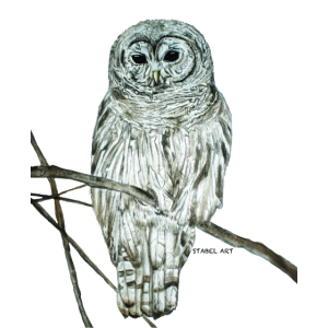 Eule / Owl