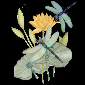 Seerosen mit Libellen