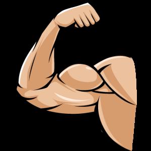 biceps muskel
