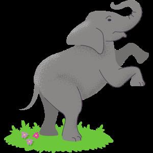 Elefant Springt Afrika Liebhaber Safari Dickhäuter