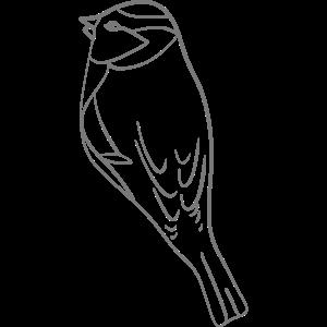 vogel - Zeichnung - süß - Tiere - vögel