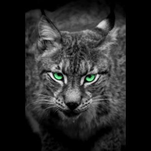 Luchs mit grünen Augen - Porträt