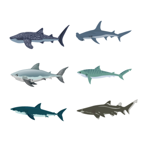 typen von haien walhai hammerhai tigerhai makohai