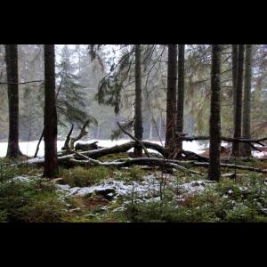 mystischer Winter-Märchenwald