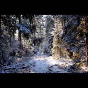 Zauberhafter Schneewald