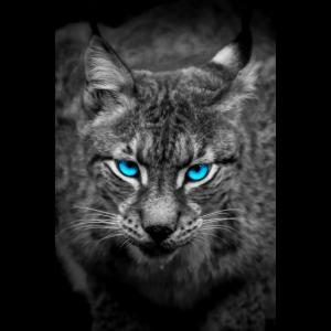 Luchs mit blauen Augen - Porträt