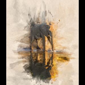 Elefantenreflexion