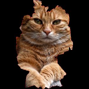 Katze, Katzen
